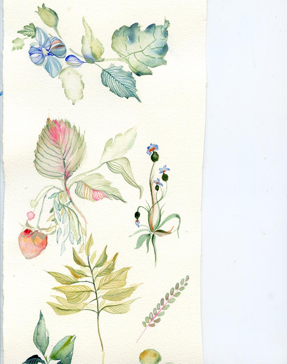 botticelli-watercolor